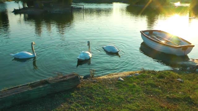 vídeos y material grabado en eventos de stock de hermoso cisne en el lago y barco de pesca en luces al atardecer - charca