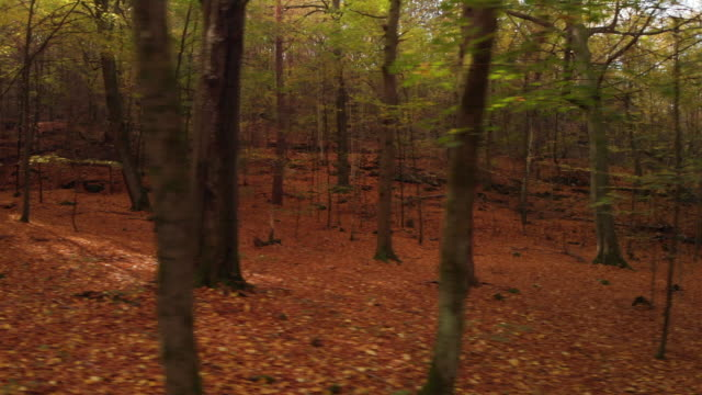 A beautiful Swedish forest in autumn