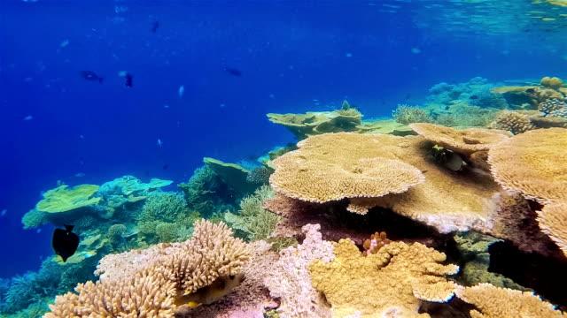 Hermosa mesa corales en Maldivas-South atolón de Ari - vídeo