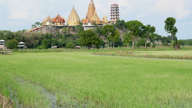 Beautiful Temple and Golden Buddha on The Top of Mountain Among Uncultivated Rice Paddy