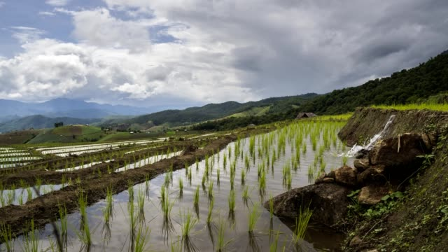 Beautiful time-lapse landscape view  of Rice Terraced paddy Field in Chiang mai, Thailand. Beautiful time-lapse landscape view  of Rice Terraced paddy Field in Chiang mai, Thailand. sa pa stock videos & royalty-free footage