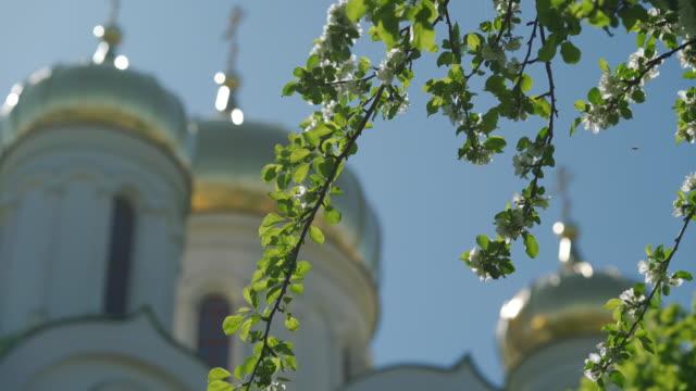 schöne baumblumen blühen verschwommene goldene kuppel rack fokus nahaufnahme - religiöses symbol stock-videos und b-roll-filmmaterial