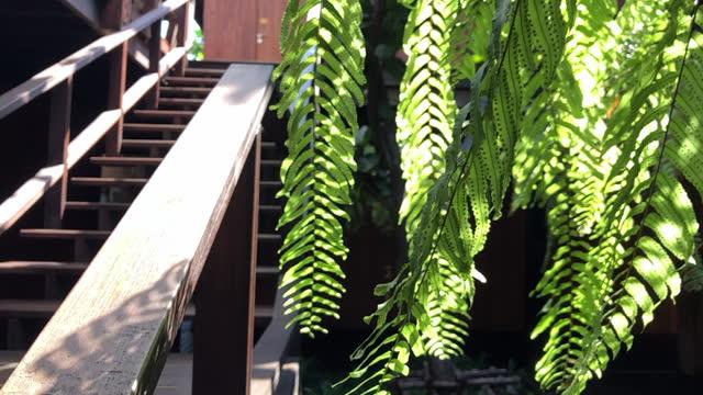 vacker trädbladsgren under morgonsol och vind i slow motion med trätrappa till trävägg i bakgrund - solar panel bildbanksvideor och videomaterial från bakom kulisserna
