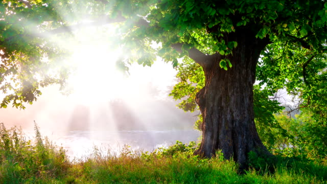 A beautiful tree with green life foliage basking in radiant sunlight video