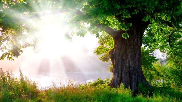 ett vackert träd med grönt liv lövverk basking i strålande solljus - himlen bildbanksvideor och videomaterial från bakom kulisserna