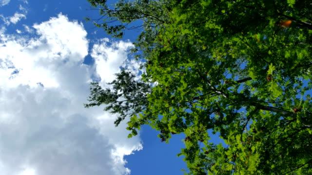 春グリーン ライフ放射日光を浴びて紅葉が美しい木。 ビデオ
