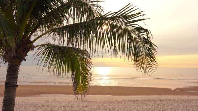 beautiful tropical beach and sea ocean with coconut palm tree at sunset or sunrise time for holiday travel - albero tropicale video stock e b–roll