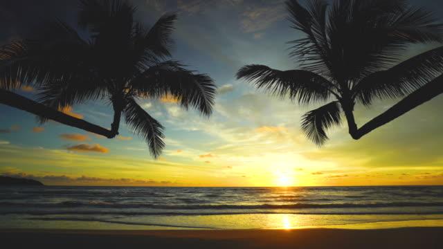 美しい熱帯のビーチと夕日ココナッツ椰子の木のシルエットと海 - リゾート点の映像素材/bロール