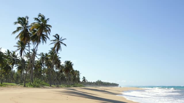 Video Beautiful tropical beach with coconut trees on the shore