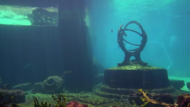 beautiful tropical fish and manta ray underwater - кораблекрушение стоковые видео и кадры b-roll