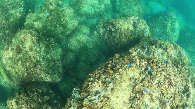 vídeos de stock, filmes e b-roll de belos peixes tropicais nadam debaixo d'água. pequenos peixes azuis tropicais nadando - equipamento de esporte aquático