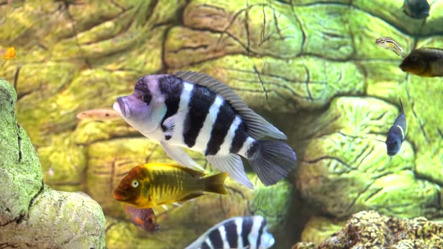 Beautiful tropical fishes video