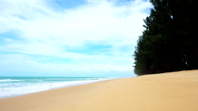 Beautiful tropical sea with pine trees on the beach in phang nga thailand Beautiful tropical sea with pine trees on the beach in phang nga thailand southeast stock videos & royalty-free footage