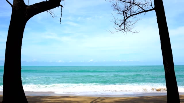 Beautiful tropical sea with pine trees on the beach in phuket thailand Beautiful tropical sea with pine trees on the beach in phuket thailand southeast stock videos & royalty-free footage