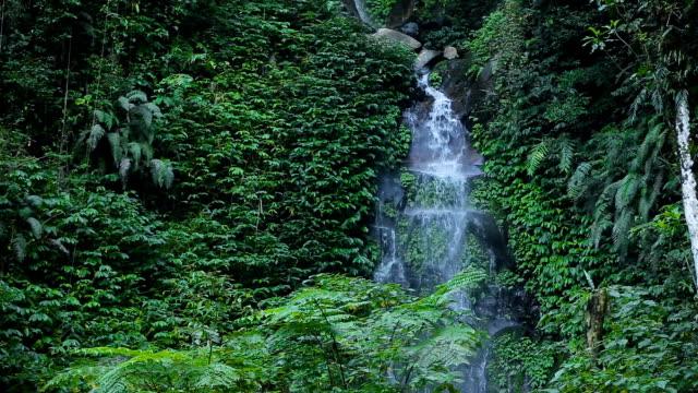 Beautiful tropical waterfall video