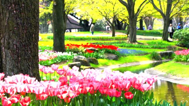 日本の美しいチューリップ ピンク - 花壇点の映像素材/bロール