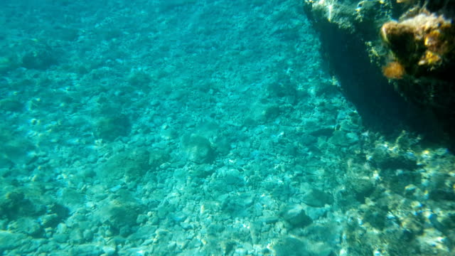 Beautiful Turquoise background of the seabed with small stones. Daylight. Sunlight. View of the turquoise background of the seabed with small stones. Lots of daylight. The sun's rays reflect on the bottom as the waves move. Colours of the lagoon. ocean floor stock videos & royalty-free footage