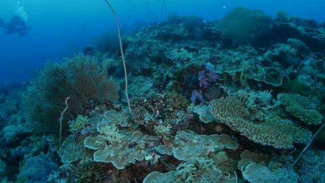 vídeos y material grabado en eventos de stock de hermoso arrecife de coral submarino - sea life park