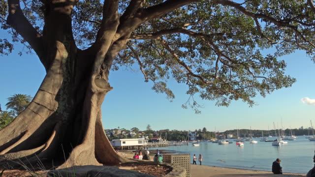 Beautiful view at Watson Bay, Australia video