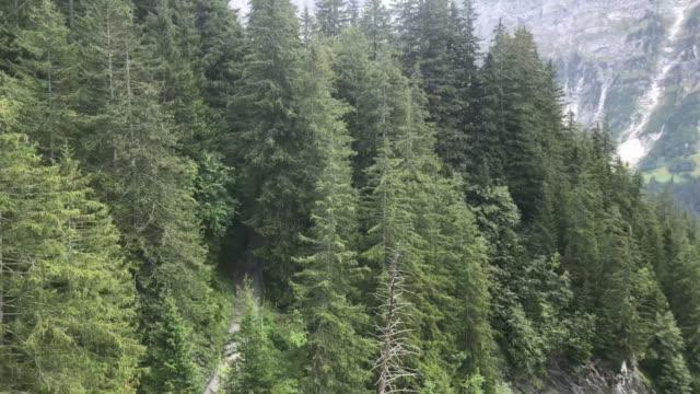 vacker utsikt från linbanan flyttar i grindelwald, schweiz - grindelwald bildbanksvideor och videomaterial från bakom kulisserna