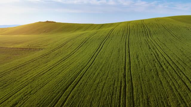 Schöne Aussicht von Naturelfenstern, Flug über das Weizenfeld am Hügel, Wiese Grasgrün, Luftaufnahme des Naturfeldes, Panorama- und Glückselerlandschaft, Warme Sonnenstrahlen, die das Gras erhellen. Einfach und schlicht. – Video