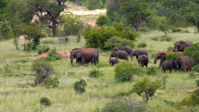 木々や草とサバンナの象の群れの美しい景色。自然の中に住む動物 - 風景の景色 - 動物の身体各部点の映像素材/bロール