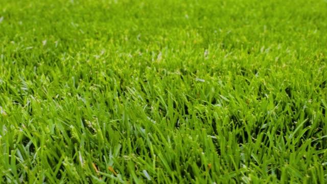 vacker utsikt över framsidan av privat trädgård. grön gräsmatta. vackra bakgrunder. - gräsmatta odlad mark bildbanksvideor och videomaterial från bakom kulisserna