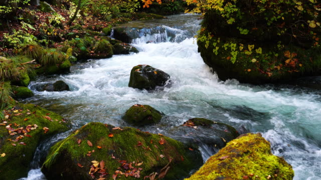 Beautiful view of the crystal clear Oirase Mountain Stream