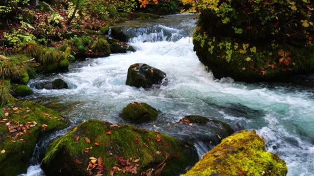 清澈的奧拉塞山溪的美麗景色 - 河 個影片檔及 b 捲影像