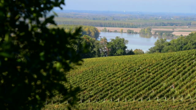 Beautiful Vineyard Landscape-Bordeaux Vineyard video