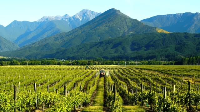 vídeos y material grabado en eventos de stock de viña hermosa. - nueva zelanda