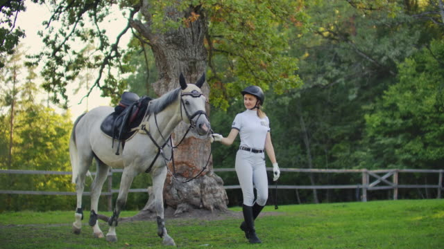 Beautiful walk with lovely horse Female is walking with her white horse before professional horse racing. It's nice walk in nature barns stock videos & royalty-free footage