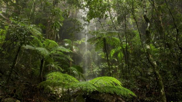 Beautiful Waterfall In Australian Rainforest