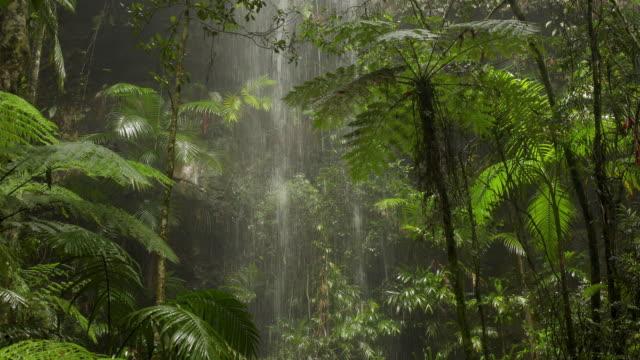 オーストラリアの熱帯雨林の美しい滝 - 雨林点の映像素材/bロール