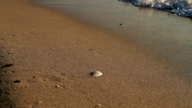 vidéos et rushes de belles vagues dans la coquille de mer - coquillage