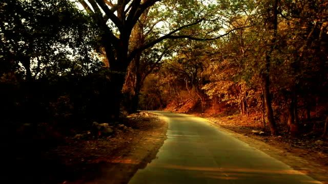 vídeos de stock e filmes b-roll de beautiful way between the forest road - berma da estrada