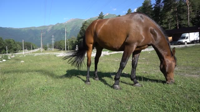 beautiful, well-groomed horses in the stable and pasture 3 - stallone video stock e b–roll