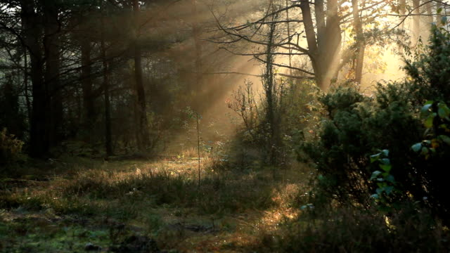 Beautiful Wild Forest with Fallen Branches video