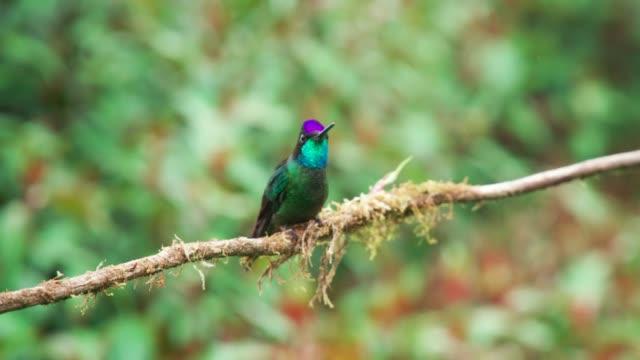 Schöne wilde Kolibri – Video