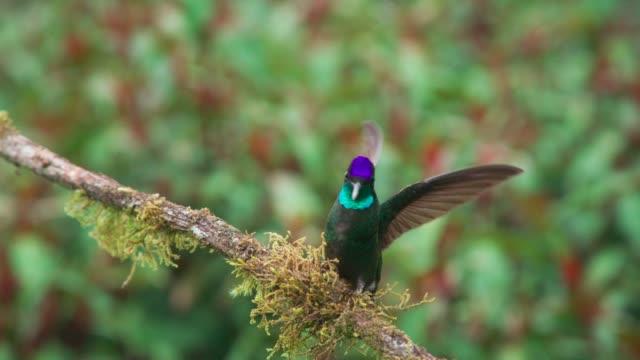 Beautiful wild hummingbird