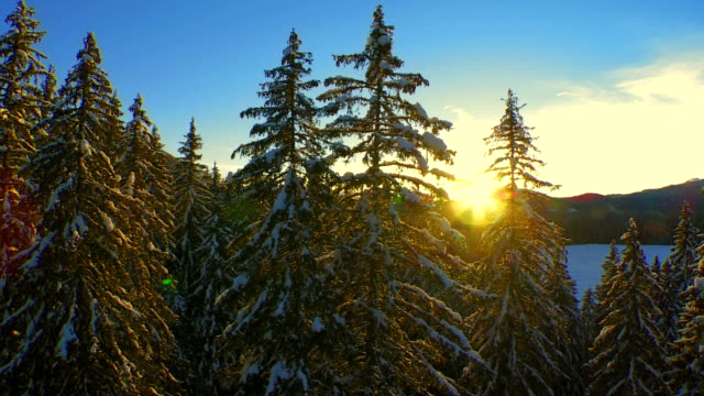 Beautiful Winter Forest At Sunset video
