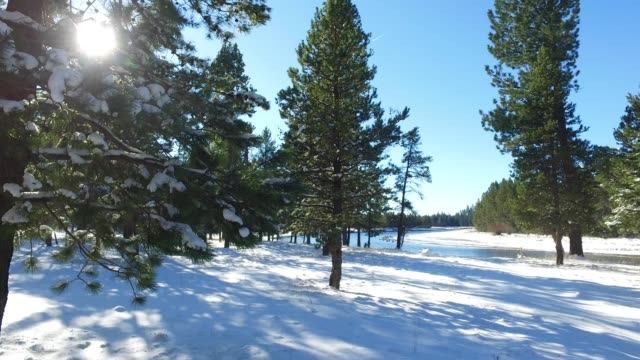 Beautiful winter landscape on the river with tall trees video