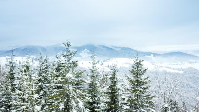 Beautiful Winter Landscape video