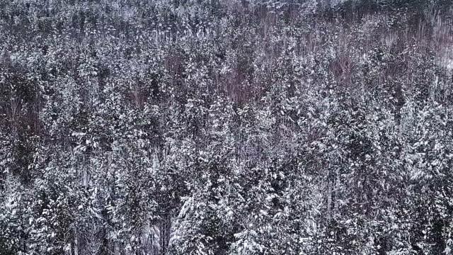Beautiful winter landscape. video
