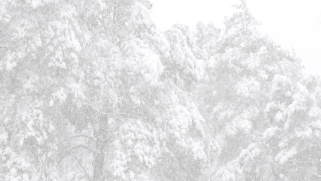 vackra vinter snöiga barrskog under snöiga snöstorm dag - djupsnö bildbanksvideor och videomaterial från bakom kulisserna