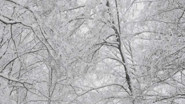 vackra vinter snöiga lövskog under snöiga snöstorm dag - djupsnö bildbanksvideor och videomaterial från bakom kulisserna