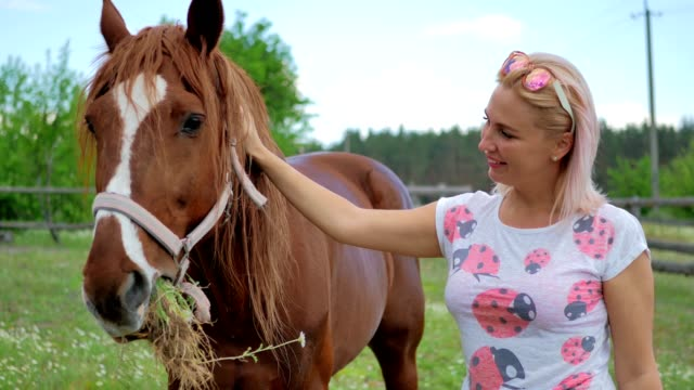 Beautiful woman feed a brown horse on the meadow video