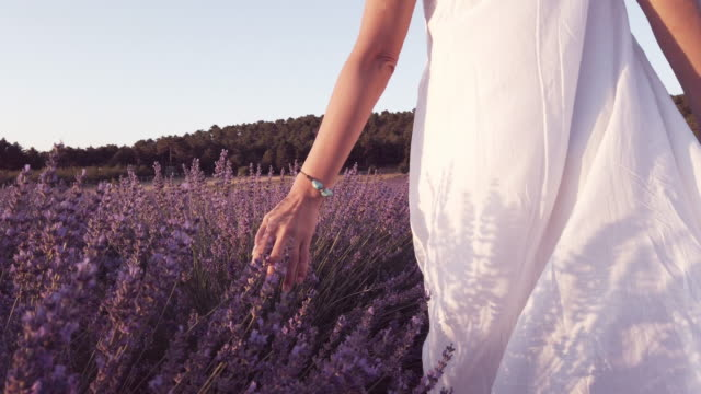 SLO MO of Beautiful woman is caressing the lavender flowers Lavender - Plant, Camera, Photography, One Woman Only, Only Women lavender plant stock videos & royalty-free footage