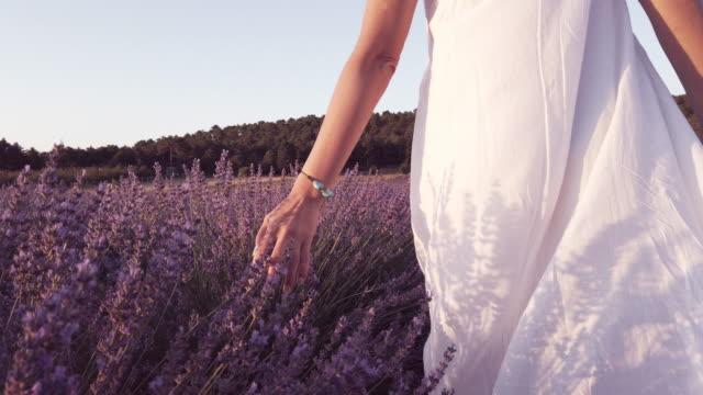 vídeos de stock e filmes b-roll de slo mo of beautiful woman is caressing the lavender flowers - lavanda planta