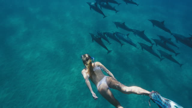 Beautiful woman swimming with dolphins video